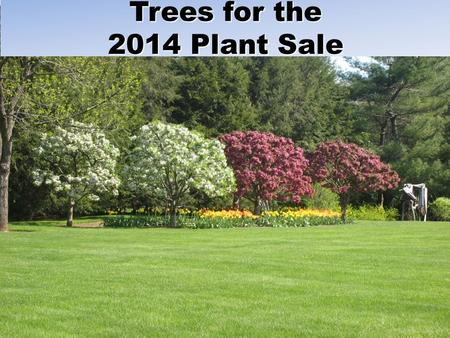 Trees for the 2014 Plant Sale.