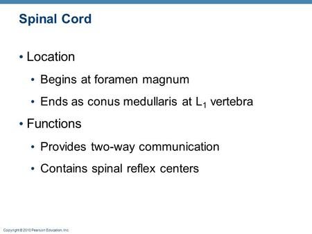 Copyright © 2010 Pearson Education, Inc. Spinal Cord Location Begins at foramen magnum Ends as conus medullaris at L 1 vertebra Functions Provides two-way.
