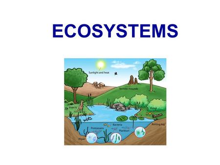 ECOSYSTEMS. What is an Ecosystem?  The biological community together with its associated non-living environment  Ecosystems consist of biotic and abiotic.