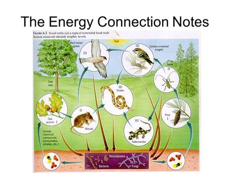 The Energy Connection Notes. What is this? A food chain A diagram that shows how each living thing gets food, and how nutrients and energy are passed.