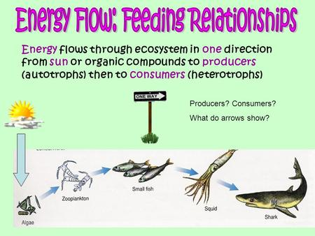 Energy flows through ecosystem in one direction from sun or organic compounds to producers (autotrophs) then to consumers (heterotrophs) Producers? Consumers?