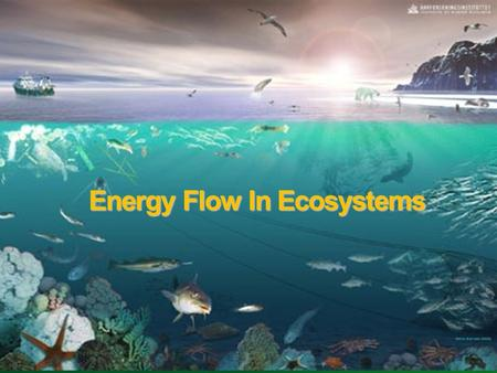 Energy Flow In Ecosystems. ENERGY FLOW All Life on Earth needs energy for cell processes. For most life on Earth, sunlight is the ultimate energy source.