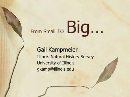 From Small to Big… Gail Kampmeier Illinois Natural History Survey University of Illinois