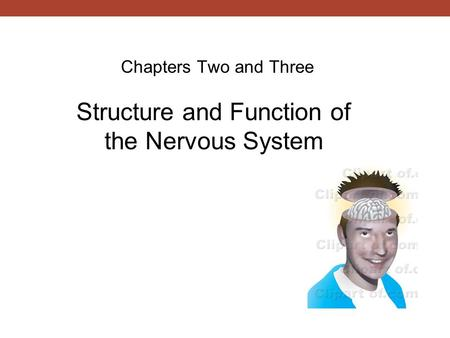 Chapters Two and Three Structure and Function of the Nervous System.