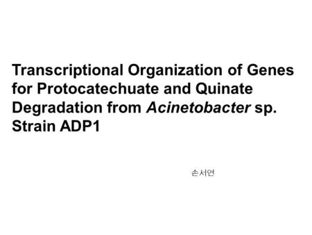 Transcriptional Organization of Genes for Protocatechuate and Quinate Degradation from Acinetobacter sp. Strain ADP1 손서연.