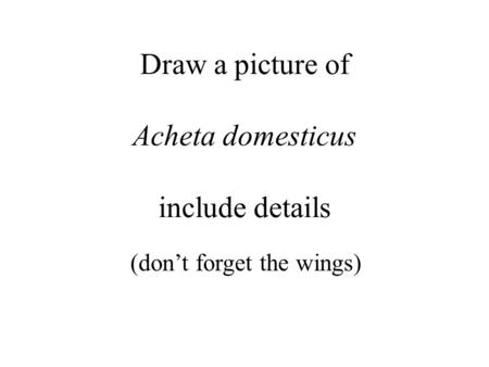 Draw a picture of Acheta domesticus include details (don't forget the wings)