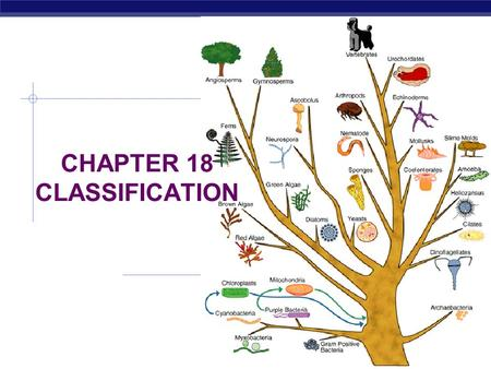 CHAPTER 18 CLASSIFICATION SECTION 1 FINDING ORDER IN DIVERSITY.