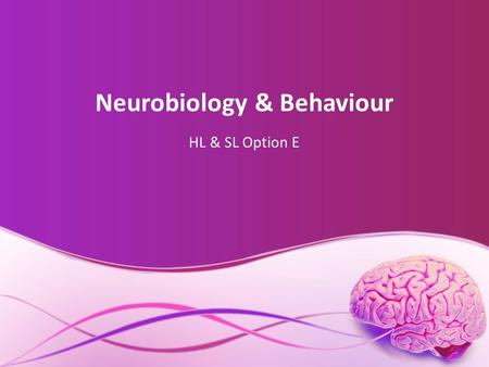 Neurobiology & Behaviour HL & SL Option E. Stimulus & Response E.1.1. Define the terms stimulus, response, and reflex in the context of animal behaviour.