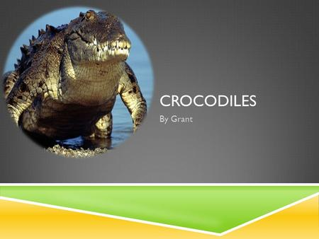 CROCODILES By Grant. INTRODUCTION My name is Grant and my animal is a crocodile.