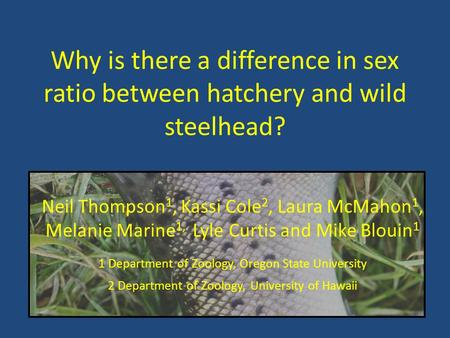 Why is there a difference in sex ratio between hatchery and wild steelhead? Neil Thompson1, Kassi Cole2, Laura McMahon1, Melanie Marine1, Lyle Curtis.