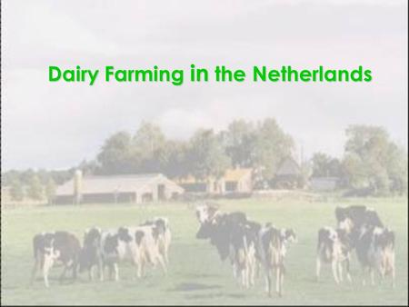 Dairy Farming in the Netherlands. Introduction Dairy farming an animal husbandry enterprise  to raise female cattle for long-term production of milk.