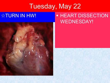 Tuesday, May 22 ✩ TURN IN HW!  HEART DISSECTION WEDNESDAY!