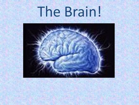 The Brain!. Facts About the Human Brain It's the center of the nervous. The brain is located in the head and protected by the skull. It's average weight.