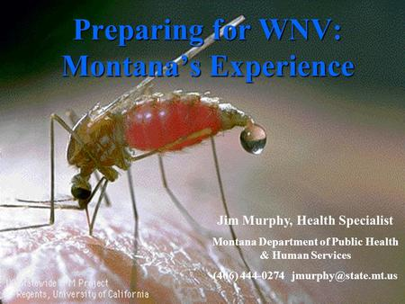 Preparing for WNV: Montana's Experience Jim Murphy, Health Specialist Montana Department of Public Health & Human Services (406) 444-0274
