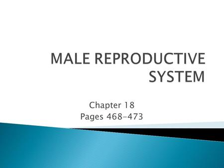 Chapter 18 Pages 468-473. ◦ 1. Describe the parts and functions of the male reproductive system. ◦ 2. Examine care of the male reproductive system and.