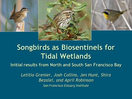 Songbirds as Biosentinels for Tidal Wetlands Initial results from North and South San Francisco Bay Letitia Grenier, Josh Collins, Jen Hunt, Shira Bezalel,