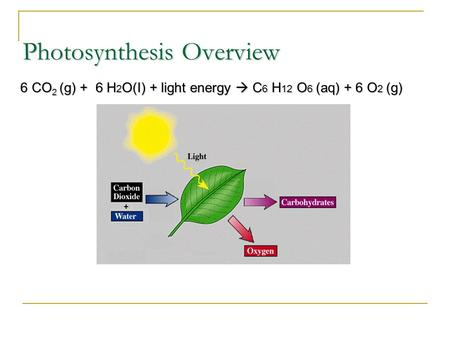 Photosynthesis Overview 6 CO 2 (g) + 6 H 2 O(I) + light energy  C 6 H 12 O 6 (aq) + 6 O 2 (g)