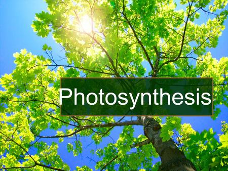 Photosynthesis. I.Photosynthesis A.Process that traps light energy & uses it for carbohydrate synthesis. B.Phototrophs - both plants and bacteria.