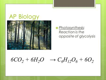 AP Biology  Photosynthesis: Reaction is the opposite of glycolysis 6CO 2 + 6H 2 O → C 6 H 12 O 6 + 6O 2.