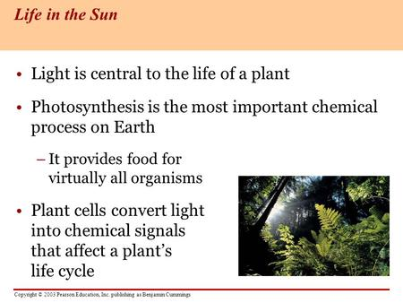 Copyright © 2003 Pearson Education, Inc. publishing as Benjamin Cummings Light is central to the life of a plant Photosynthesis is the most important chemical.