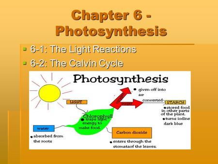 Chapter 6 - Photosynthesis  6-1: The Light Reactions  6-2: The Calvin Cycle.