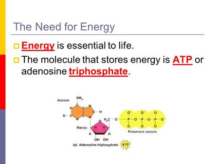 The Need for Energy  Energy is essential to life.  The molecule that stores energy is ATP or adenosine triphosphate.