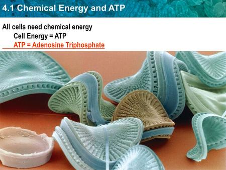 4.1 Chemical Energy and ATP All cells need chemical energy Cell Energy = ATP ATP = Adenosine Triphosphate.