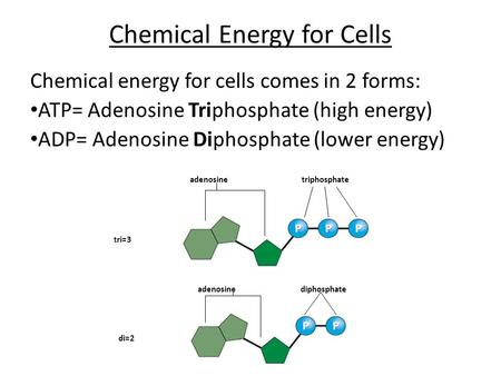 Chemical Energy for Cells Chemical energy for cells comes in 2 forms: ATP= Adenosine Triphosphate (high energy) ADP= Adenosine Diphosphate (lower energy)