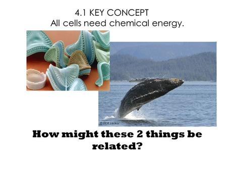 4.1 KEY CONCEPT All cells need chemical energy. How might these 2 things be related?