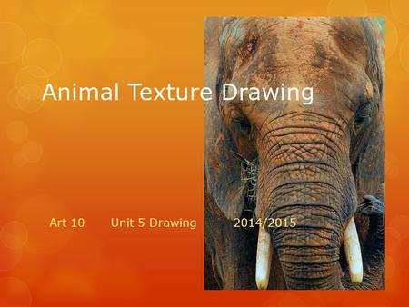 Animal Texture Drawing Art 10 Unit 5 Drawing2014/2015.