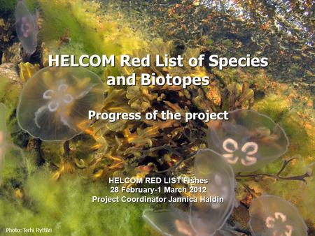 Photo: Terhi Ryttäri HELCOM Red List of Species and Biotopes Progress of the project HELCOM RED LIST Fishes 28 February-1 March 2012 Project Coordinator.