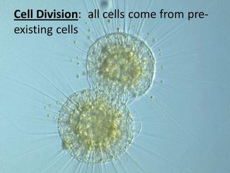 Cell Division: all cells come from pre- existing cells.