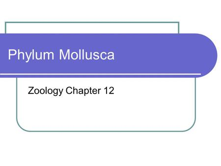 Phylum Mollusca Zoology Chapter 12. Phylum Mollusca Phylum Mollusca includes snails and slugs, oysters and clams, and octopuses and squids.
