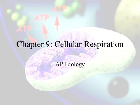 Chapter 9: Cellular Respiration AP Biology. Oxidation and Reduction E is gained by the transfer of e ' s The relocation of e- ' s releases the stored.
