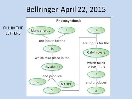 Bellringer-April 22, 2015 FILL IN THE LETTERS. Overview of Cellular Respiration H. Biology Ms. Kim.