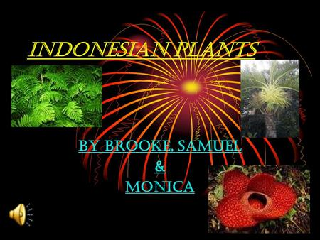 Indonesian plants By Brooke, Samuel & Monica INDONESIAN PLANT DIFFERENT INDONESIAN PLANTS: GIANT RAFFELISIA INDONESIAN PALM TREE RARE PITCHER PLANT FERN.