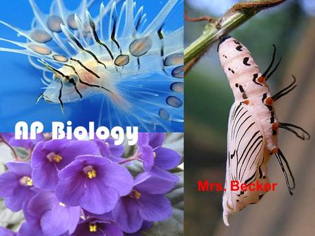 AP Biology Mrs. Becker. Chapter 1 Introduction: Themes in the Study of Life.