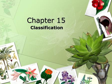 Chapter 15 Classification History of Taxonomy Taxonomy The branch of biology that names and groups organisms according to their characteristics and.