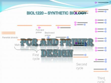 1. 2 VARIANTS OF PCR APPLICATIONS OF PCR MECHANICS OF PCR WHAT IS PCR? PRIMER DESIGN.