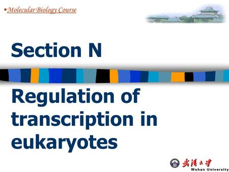 Section N Regulation of transcription in eukaryotes Molecular Biology Course.