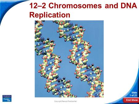 End Show Slide 1 of 21 Copyright Pearson Prentice Hall 12-2 Chromosomes and DNA Replication 12–2 Chromosomes and DNA Replication.