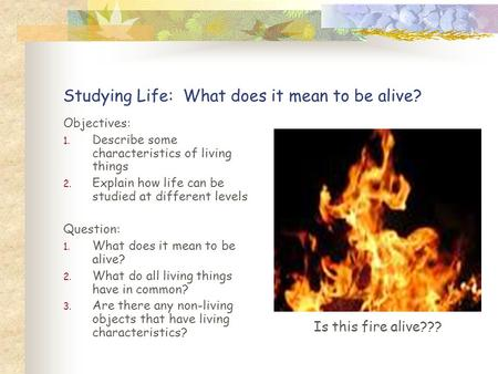 Studying Life: What does it mean to be alive? Objectives: 1. Describe some characteristics of living things 2. Explain how life can be studied at different.