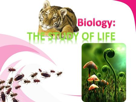 Biologist study the interactions of living things with other living things and their environments. Biologist study the interactions of living things with.