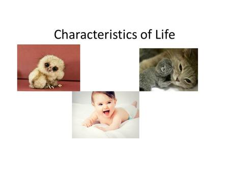 Characteristics of Life. Movement All Living things move.