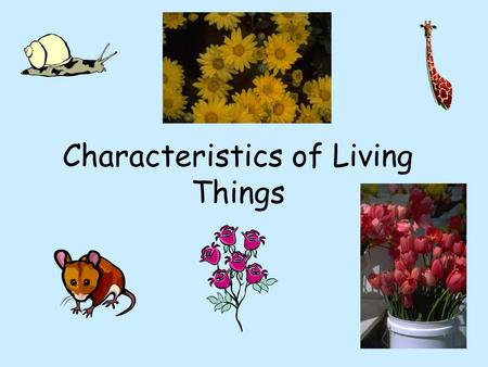 Characteristics of Living Things. Characteristics of ALL Living Things.
