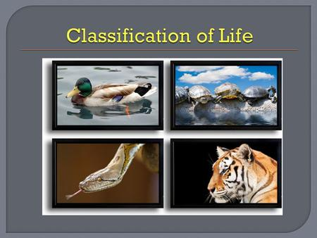  Classification: is the process of grouping things based on their similarities.  Non living things can be classified based up external features like.