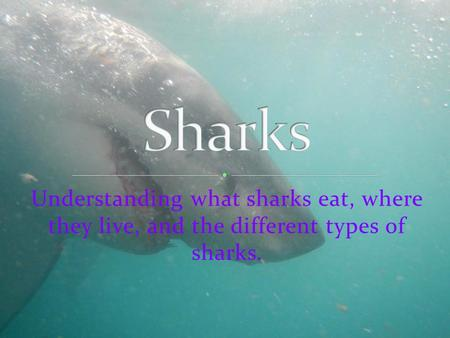 Sharks Understanding what sharks eat, where they live, and the different types of sharks.