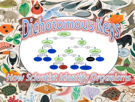 A classification system is a way of separating a large group of closely related organisms into smaller subgroups. With such a system, identification of.
