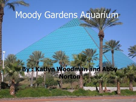Moody Gardens Aquarium By : Katlyn Woodman and Abby Norton.