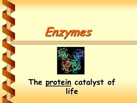 Enzymes The protein catalyst of life. Enzymes: The Video Clip.